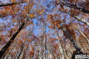 Bosco del Cansiglio colori autunno