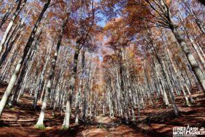 Sentiero Naturalistico S Bosco del Cansiglio